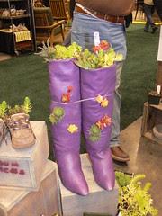 Sedums 'n boots