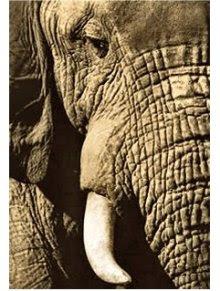 Trombas de elefante