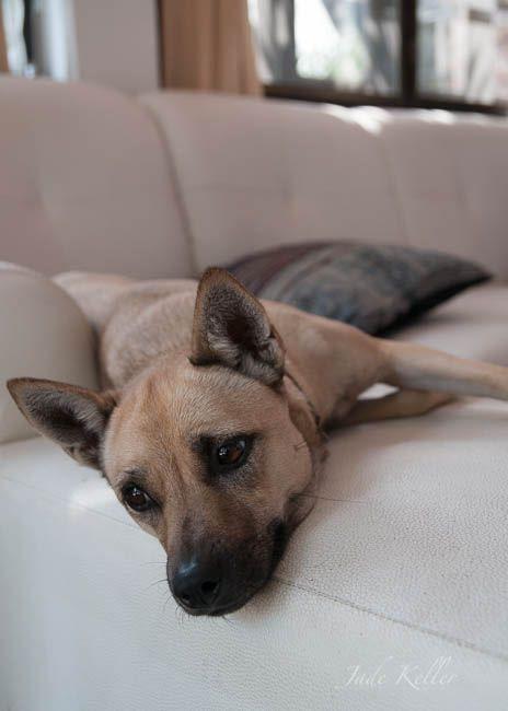 Feb. 7, Lazy mutt