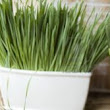 Wheatgrass As An Effective Solution to Problem Hormones