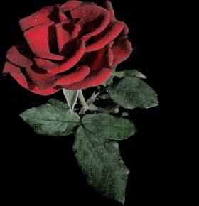 Gambar Bunga Mawar Merah Wallpaper