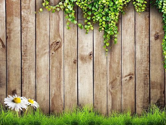 How to Build a Garden Privacy Wall for Climbing Outdoor Plants | Millcreek Gardens