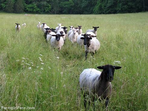 (30-11) Found 'em! - FarmgirlFare.com