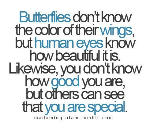 Butterflies Dont Know The Color Of Their Wings But Human Eyes Know