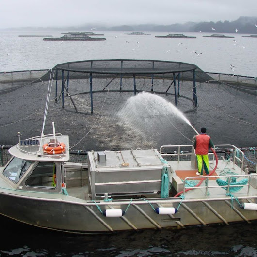 Tasmanian salmon industry sustainability in doubt, affecting local tourism