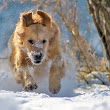 Keeping Dogs Safe & Warm in Winter: A Complete Cold Weather Guide