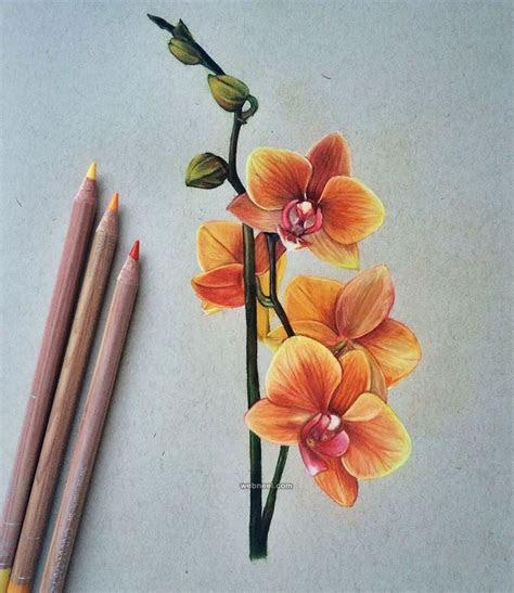 beautiful color pencil drawings  top artists