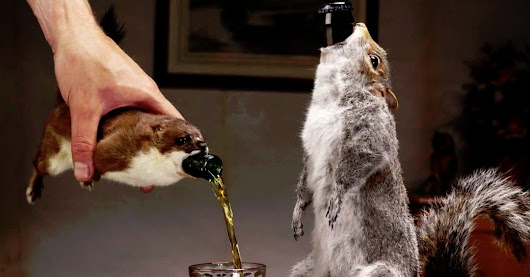 World's strongest and most expensive beer is sold in the body of a squirrel