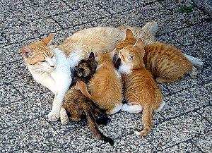 Cats, Kitten