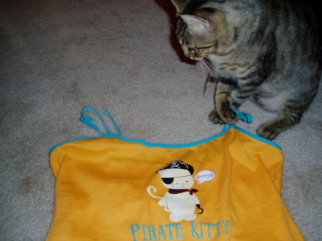 Ashley the pirate kitty