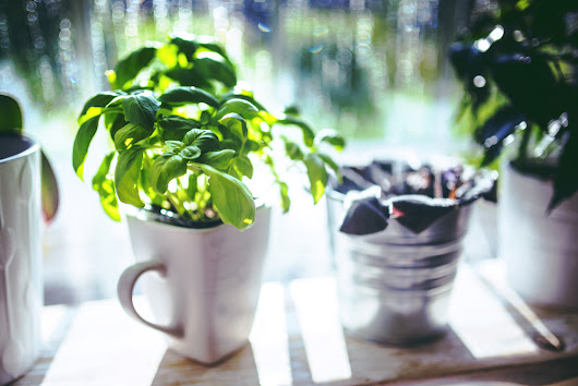 Kitchen herbs that can grow in your home all year long - Ahomeround