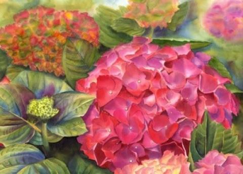 Hydrangea - watercolor