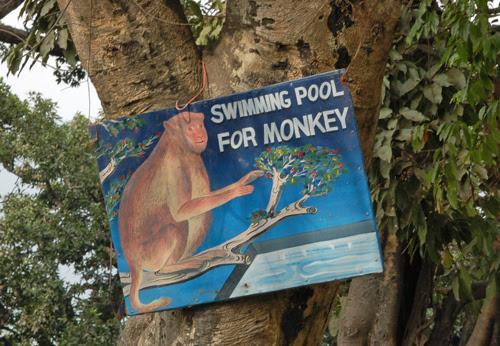 2swimming-pool-for-monkey.jpg