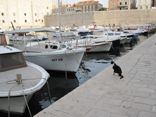 cat and boats in Dubrovnik 2010