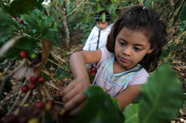 H Ονδούρα είναι μια μια χώρα που ελπίζει να γίνει ο μεγαλύτερος εξαγωγέας καφέ της Κεντρικής Αμερικής. Όμως εκεί δεν απαγορεύεται η παιδική εργασία.