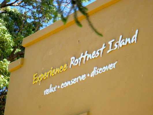 Ever Heard of Rottnest Island? | O' The Places We can Go!