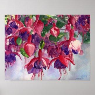 Fuchsia Lore print