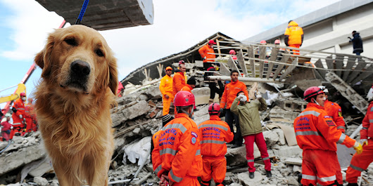 Facing a Natural Disaster with Your Pets