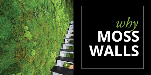 Why Moss Walls [Infographic]