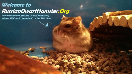 Ultimate Russian Dwarf Hamster Guide - Videos, How To's &