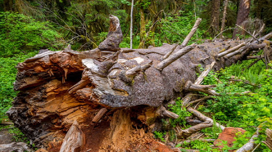 Ways to Repurpose, Recycle, or Leave a Fallen Tree