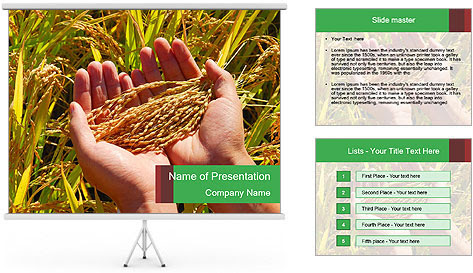 King jin caster google rice paddy in human hands powerpoint template toneelgroepblik