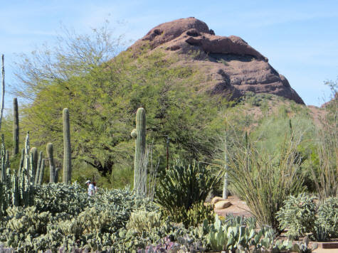 Tourist Attractions in Phoenix Arizona