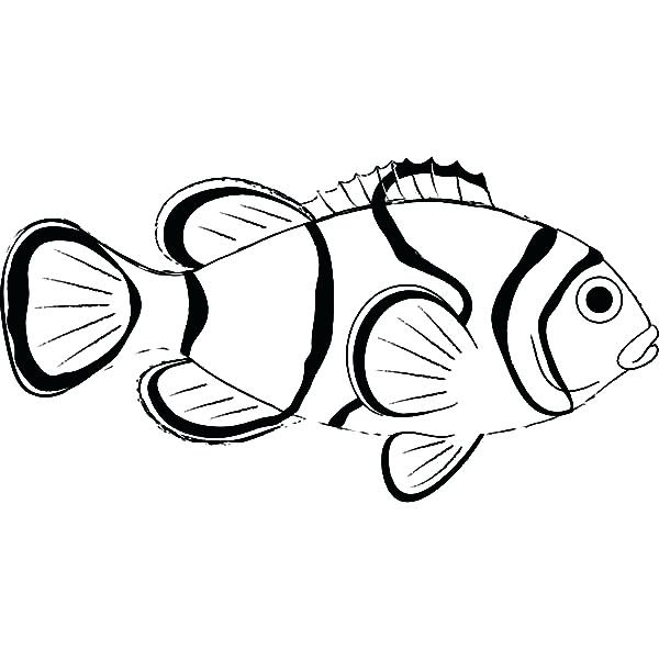 Clown Fish Coloring Page at GetColorings.com | Free ...