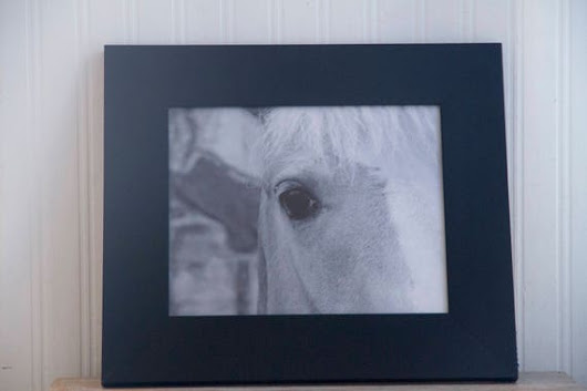 Black White Horse Photography Framed Abstract Animal Print