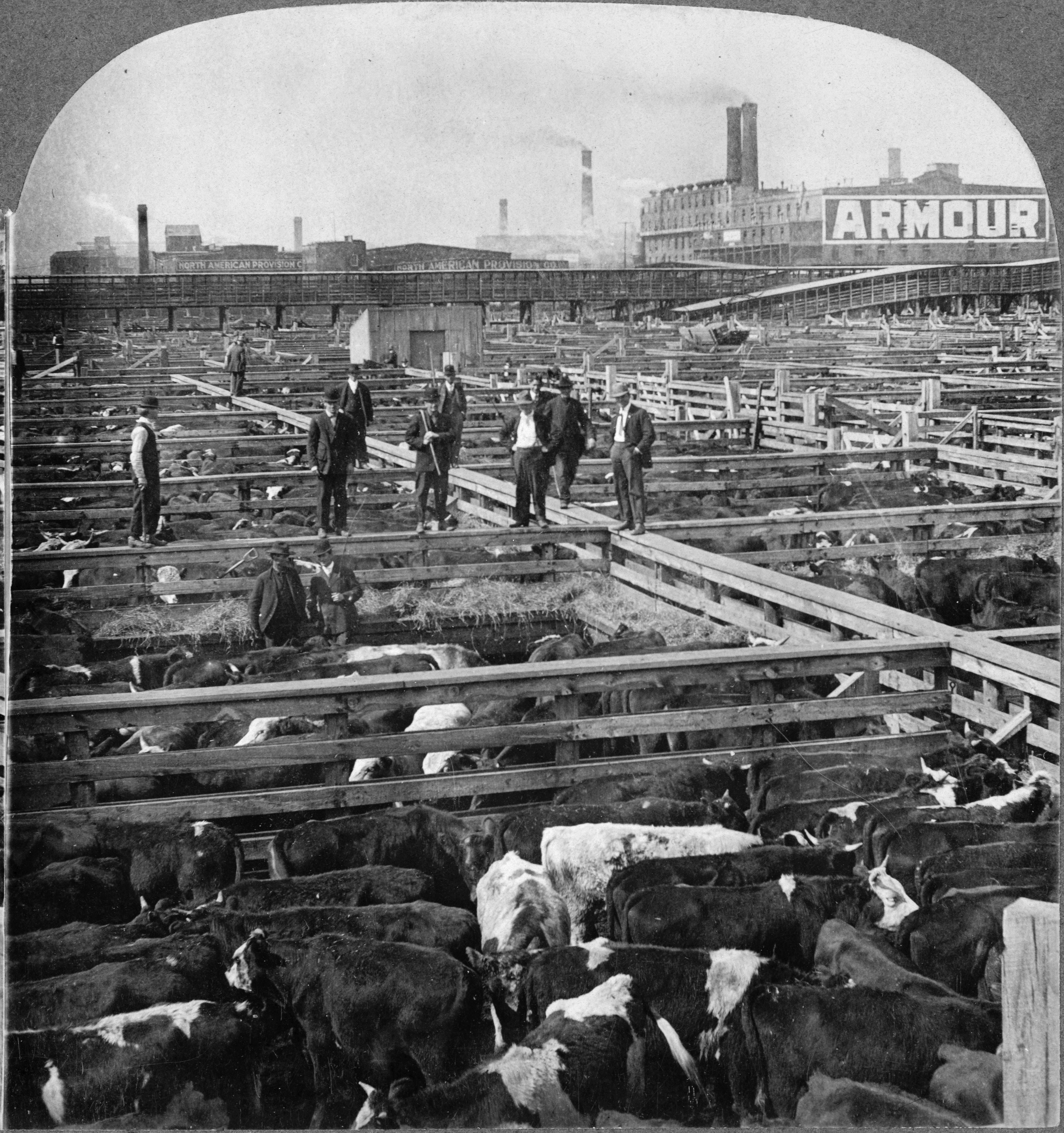 http://upload.wikimedia.org/wikipedia/commons/d/d0/Chicago_stockyards_cattle_pens_men_1909.jpg