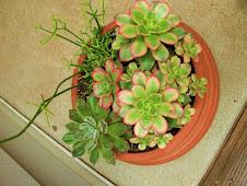 Portable succulent garden