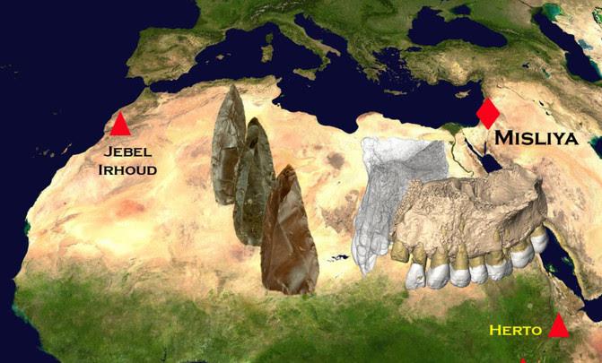 Resultado de imagen para fosil-mandibula-hueso-humano-evolucion-homo-sapiens-dientes
