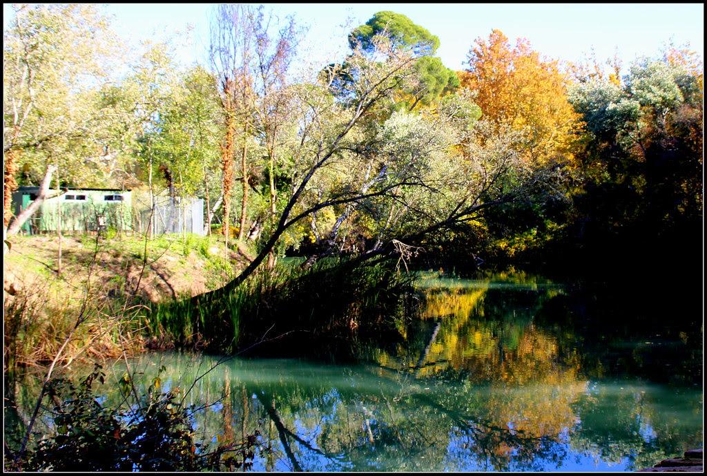 otoño en los Jardines del Príncipe de Aranjuez