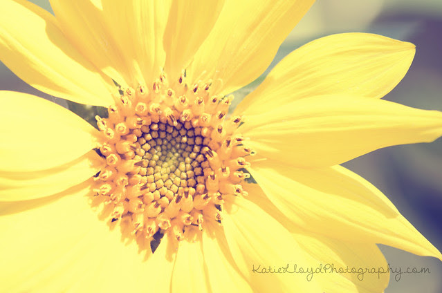 Sunflower---Vintage-wm