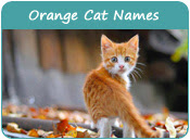 Cat Names by Colors, Names for Cats of Various Colors
