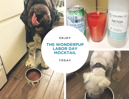 Keep your Pup Cool This Labor Day! « Wondercide Blog