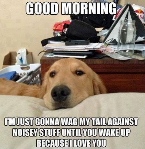 Funny Good Morning Images And Funny Morning Pics Funny Gm Images