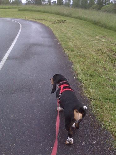 A rainy Wednesday walk