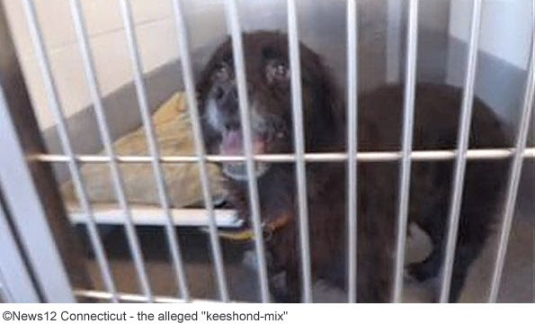 Dogs Bite Decatur Al: STRATFORD CT - A 91-YEAR-OLD WOMAN