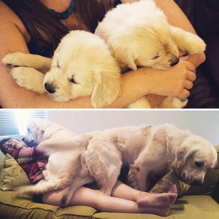 Before And After: 5 Weeks & 55 Weeks