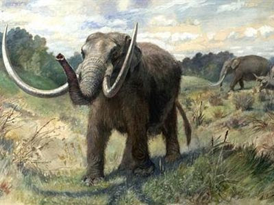 El ser humano ya causó la extinción de especies hace 100.000 años.