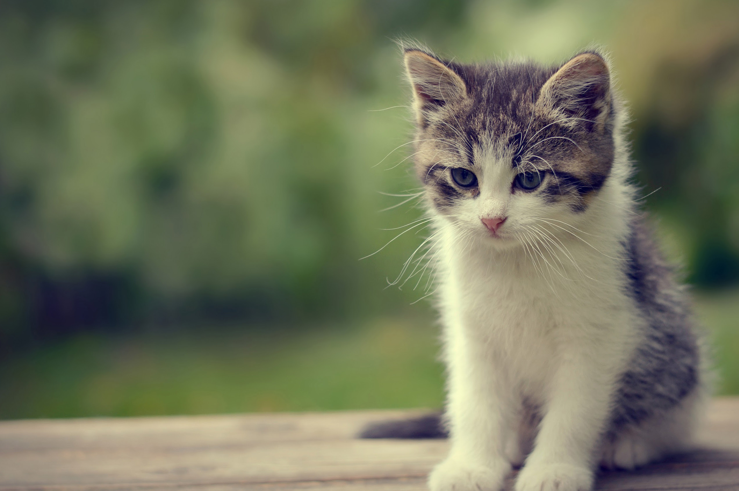 Cute Cute Cats Worth The Money
