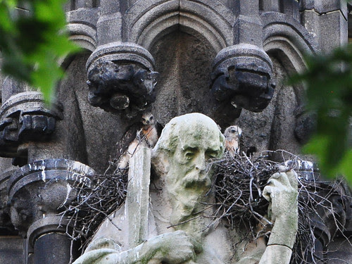 One Minute There are Two Baby Hawks...