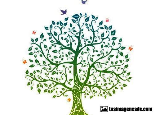 Imágenes De árbol Genealógico Imágenes