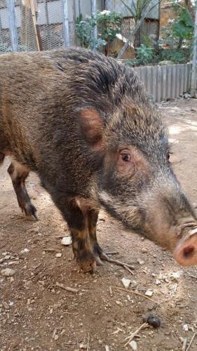 香港野豬關注組對「2014年施政報告」三點回應