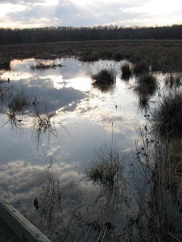 Huntley Meadows