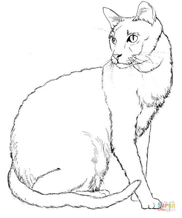 Cat 7 coloring page   Free Printable Coloring Pages