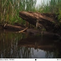 Photo: Northern Woodlands