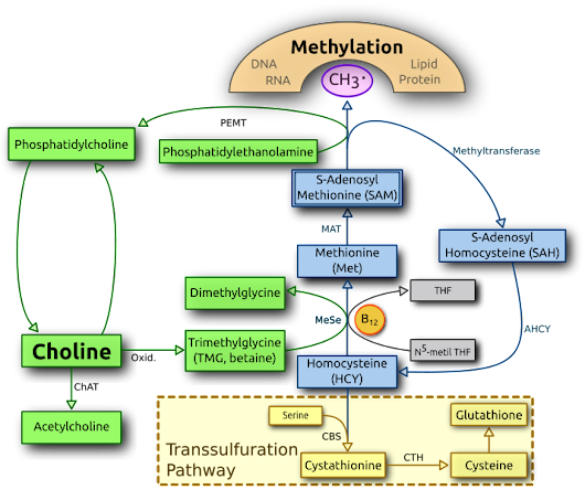 Methylation and the folate cycle: You're on the wrong path(way)!