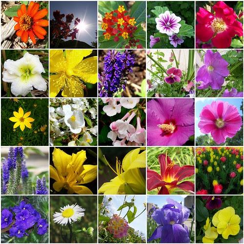 My Flower Pics by Crochet Attic